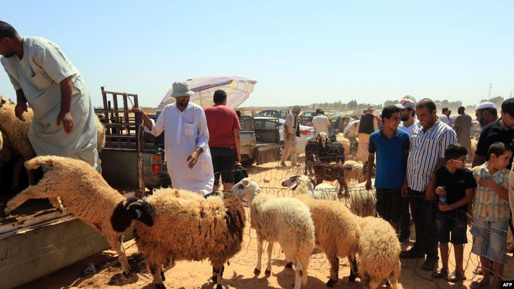 العيد في ليبيا غلاء الأضاحي يعمق جراح الحرب Minbar Libya